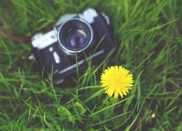 Camera on strap laying in field of green grass with yellow flower
