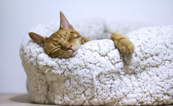 Orange tabby cat asleep in beige cat bed.