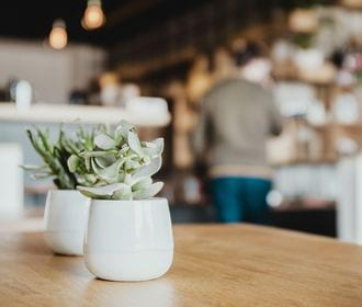 Stock Photo of a cafe with two potted plants sitting on a wooden table top.