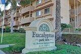 Eucalyptus Parkview
