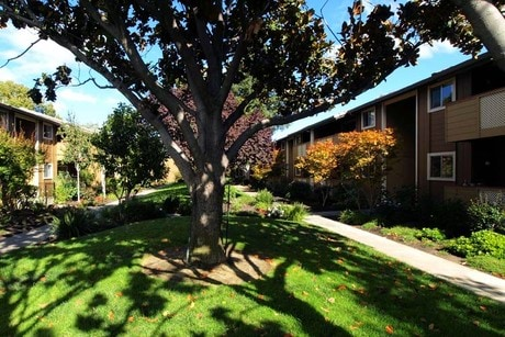 Apartment for Rent in Cupertino