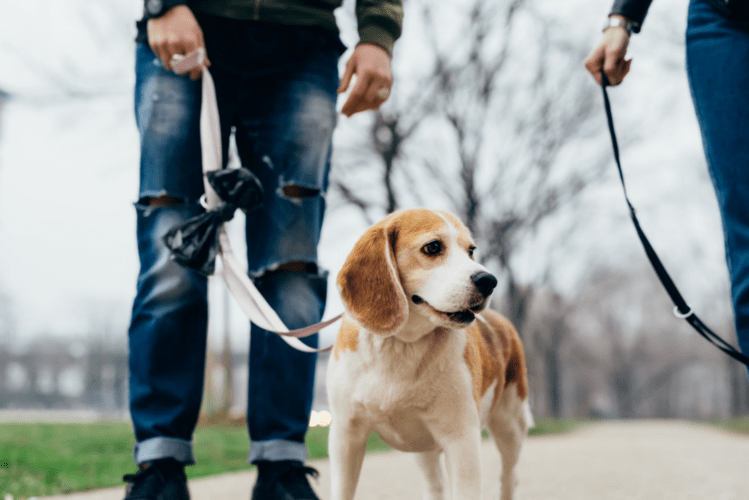 Stock image of a dog being walked in a park by a man holding a leash.