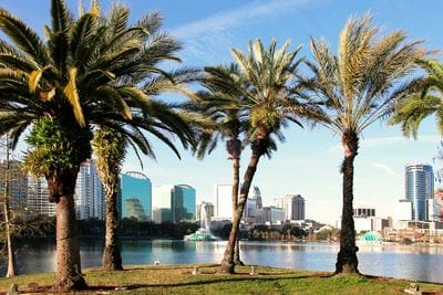 Amara at Metro West - Lifestyle filler image of palm trees with the Orlando skyline in the background.